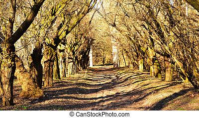 sunlight., forêt