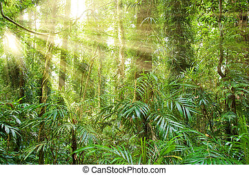 sunlight in dorrigo world heritage rainforest - sunlight in...