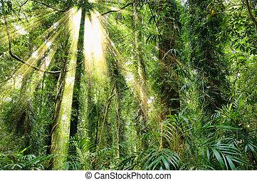 sunlight in the beautiful dorrigo world heritage rainforest