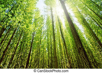 Sunlight in Forest - Sun glows through the dense forest