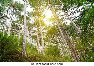 Sunlight in forest. Nature design.