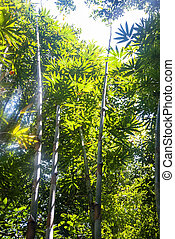 Sunlight in the bamboo forest