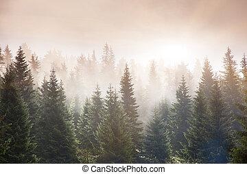 Sunlight in the green forest early morning. Carpathian, Ukraine, Europe. Beauty world.