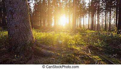 Sunlight in the green forest - sun shines in the deep wood...