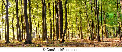 forest - Sunlight in the green forest, summer time