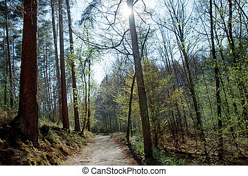 Sunlight in the spring forest