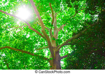 sunlight in tree