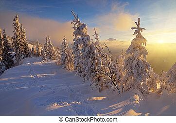 Sunlight in winter