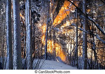 Sunlight in winter forest