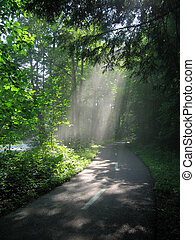 Sunlight streams through woods in a metropark in Cleveland, Ohio