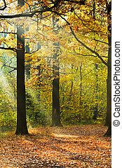 sunlight lit lawn in autumn forest