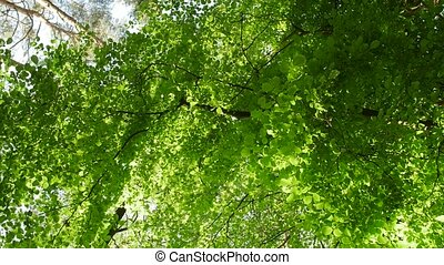 Sunlight makes its way through the leaves of the trees. Solar glare in a dense forest.