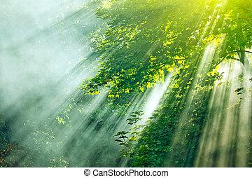 sunlight mist forest - dense sunbeams through trees in...