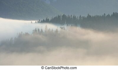 Sunlight on Forest  with fog, Time