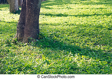 Sunlight on grass in the park