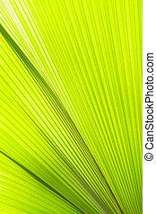 Sunlight on palm leaf