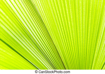 Sunlight on palm leaf