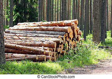 Sunlight on Stack of Pine Logs in Summer Forest - Sunlight...