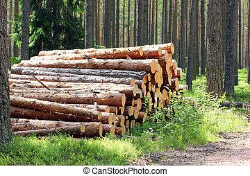 Sunlight on Stack of Pine Logs in Summer Forest - Sunlight...