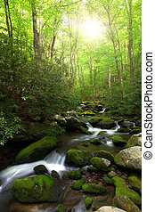 Brilliant morning sunlight over a creek in the mountain forest.