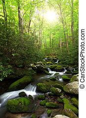Sunlight over creek - Brilliant morning sunlight over a ...