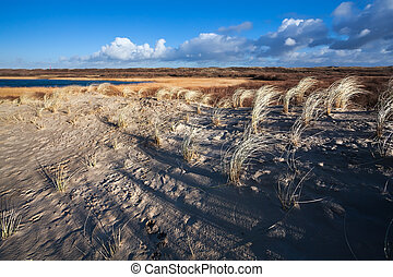 sand dunes in North Holland - sunlight over sand dunes in...