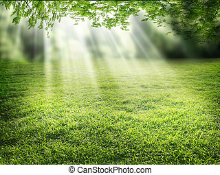 Sunlight - Sunlight falling down through the leaves of tall...