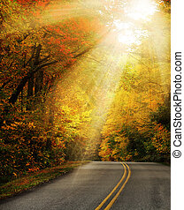Sunlight rays on forest road - Sunlight rays through the...