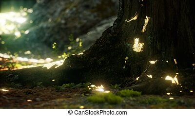 Sunlight rays pour through leaves in a rainforest