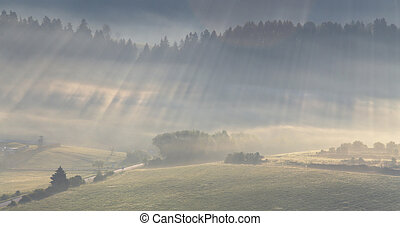 Sunlight rays shines in forest - Sunlight rays shines...
