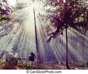 Sunlight rays pour through leaves in a rainforest in...