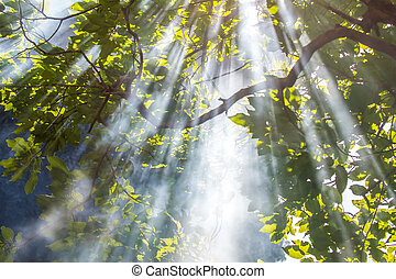 Sunlight Rays Streaming Through Trees - Sunlight streaming...