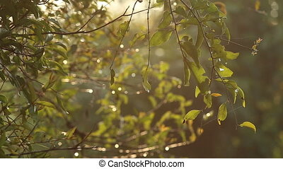 sunlight reflects in drops of dew on tree leaves