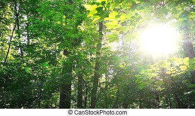 Sunlight shines through trees
