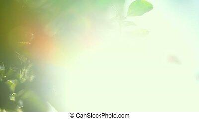 Sunlight shines through treetop bra - Sunlight shines...