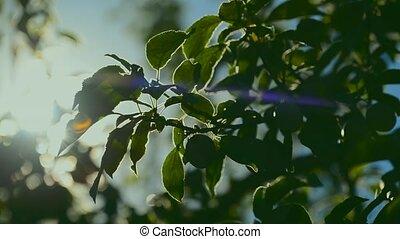 Sunlight shines through treetop - Sunlight shines through...