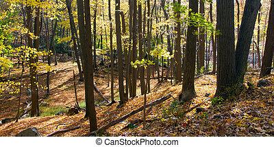 Sunlight Shines Trhough Golden Fall Forest