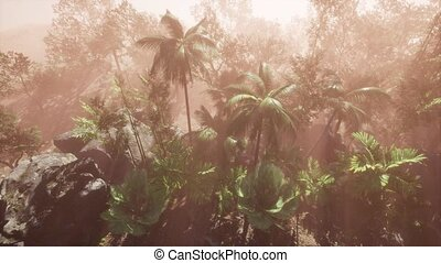 Sunlight shining in tropical jungle