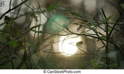 Sunlight shining through the branches , natural blurred background, Nature abstract background.