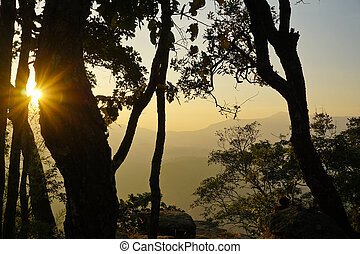 Sunlight shining through the trees, nature backgrounds