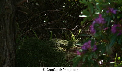 Sunlight Shining Through Trees And Onto Ground - Steady,...