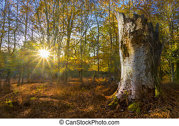 Sunlight streams through trees and leaves in the New Forest
