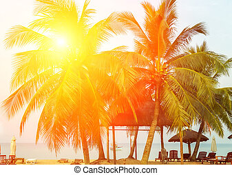 sunlight sunset Palm trees or beach