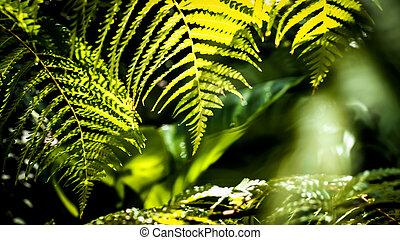 Fern Green leaves pattern