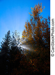 Sunlight through haze in trees