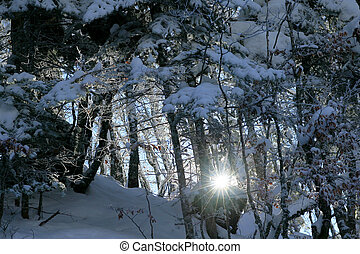 Sunlight through snowy trees