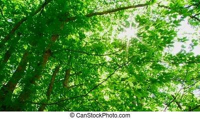 Sunlight - Through the foliage breaks sunlight.