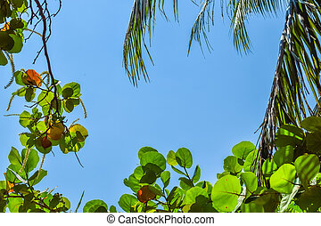 Sunlight through the leaves of a tropical tree with clear sky concept