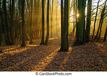 sunlight through the trees in the autumn