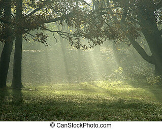 Sunlight through trees - Sun Rays through the Woodland...